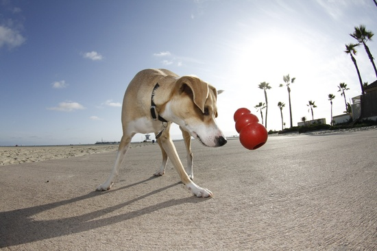 zabawka_dla psa_kong_classic_czerwona z KONG