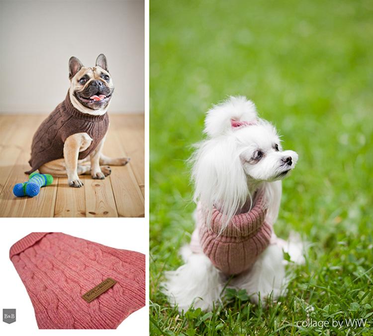 akcesoria dla psa i kota, sweterek dla psa