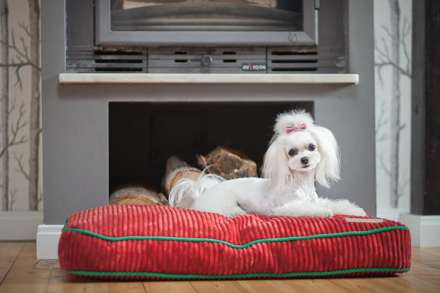 akcesoria dla psa i kota, legowisko