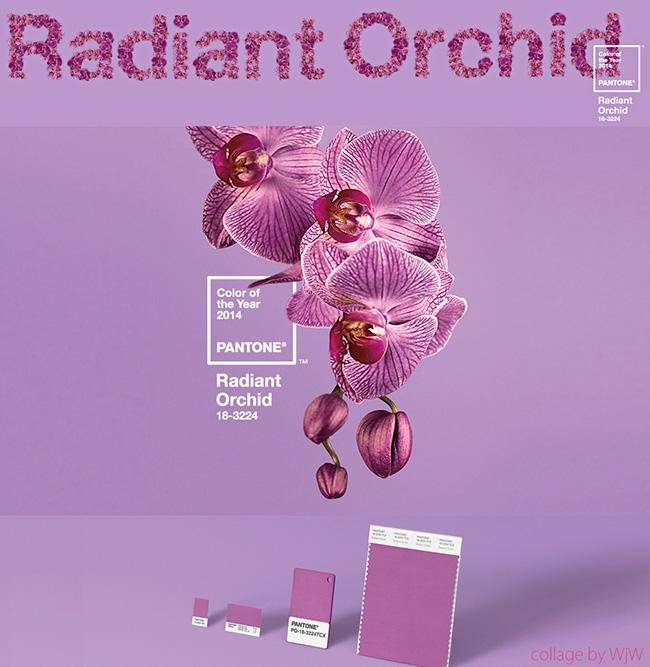 radiant-orchid-modny kolor 2014