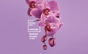 kolor roku Pantone Radiant Orchid