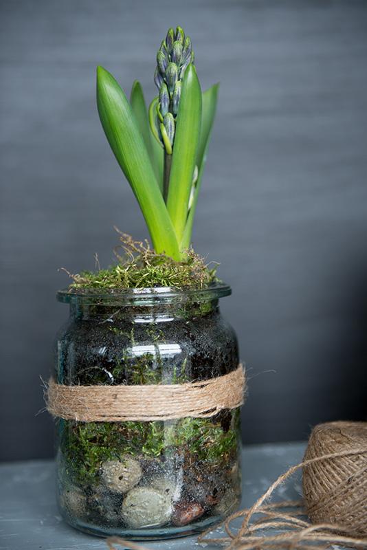 dekoracja wnętrz kwiatami, dekoracja wnętrz hiacyntem, dekoracja z hiacyntu na Wielkanoc, hiacynt w słoiku