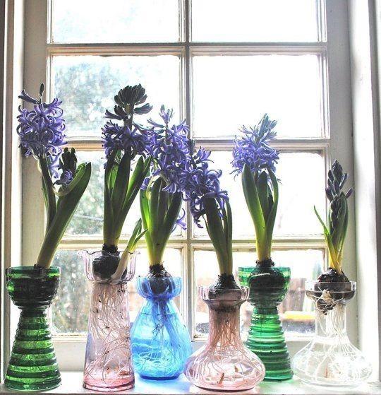 dekoracja wnętrz kwiatami, dekoracja wnętrz hiacyntem, dekoracja z hiacyntu na Wielkanoc, pomysł na hiacynt